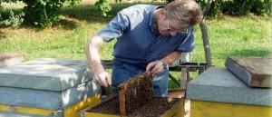 Bruno Mozzato - Esperienza e passione per le api